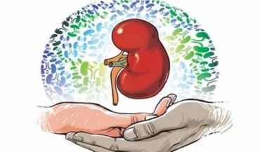 Legal Formalities for Kidney Transplant: Things You Need To Know