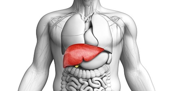 Life After Liver Transplant: Recovery and Quality of Living
