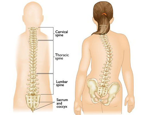 Scoliosis: Cost, Procedure and Clinics | MediGence